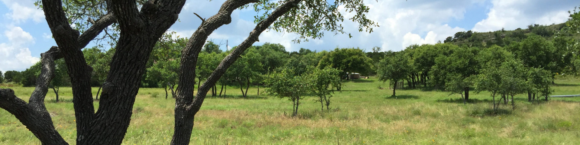 Hill Country Acreage